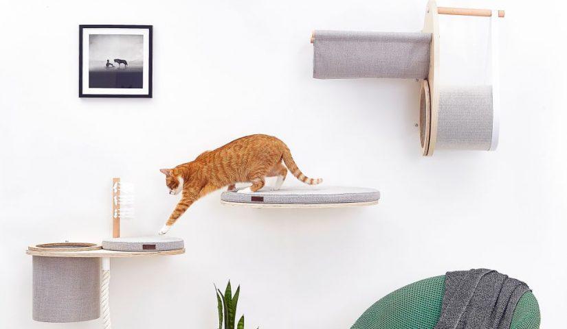 Kot chodzi po kocich półkach wmontowanych w ścianę